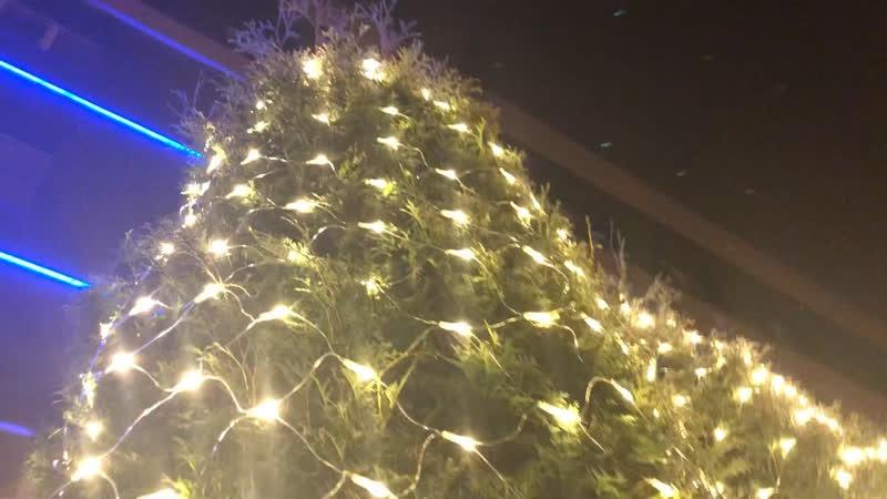 Новогодние кактусы возле «Юбилейки»