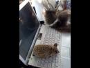 ежик и кот у компьютера
