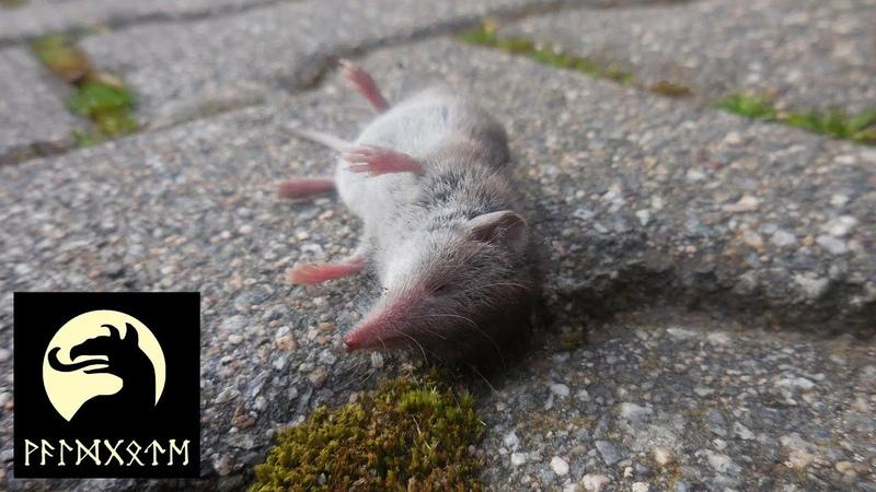 Dem Tod geweihte Tiere erlösen?