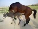 The horse fucking fucking donkey