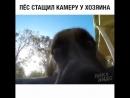 СТАВИМ ЛАЙКИ- прикольному песику который скомуниздил камеру у хозяина