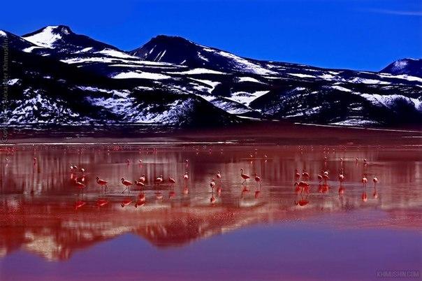 Фламинго на озере Лагуна-Колорадо, граница Боливии и Чили