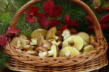 Фото рецепты заготовок из грибов на зиму Каждую осень природа щедро одаривает нас лесными лакомствами – и, если погода позволяет, то за несколько походов в лес можно набрать столько грибов, что хватит на приготовление множества вкусных заготовок, которые всю зиму будут украшать любое застолье. Грибы на зиму можно заготавливать самыми разными способами – солить, мариновать, сушить, делать грибную икру или оригинальные грибные закуски.