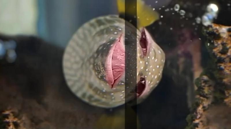 Валя рыбка 2