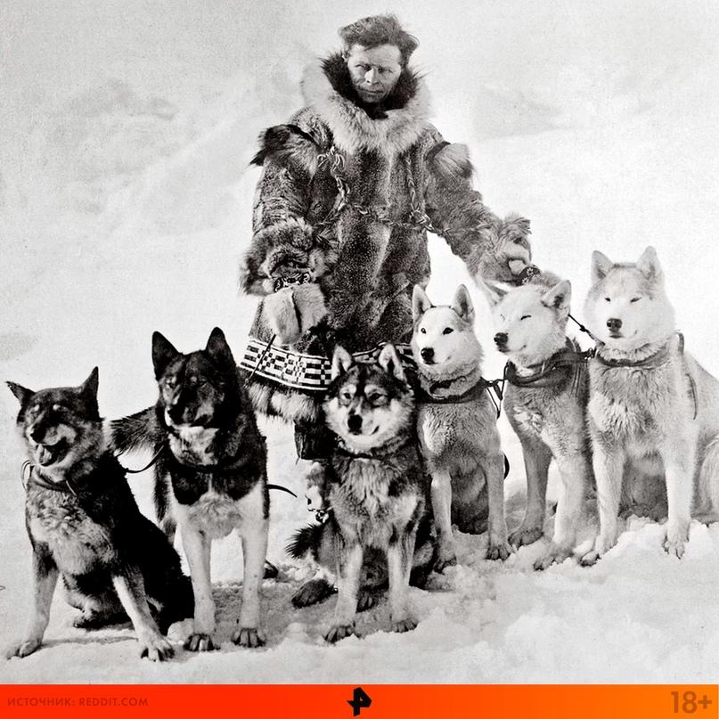 Собака — не просто друг человека, собака — его ангел-хранитель! Балто и Того — с...