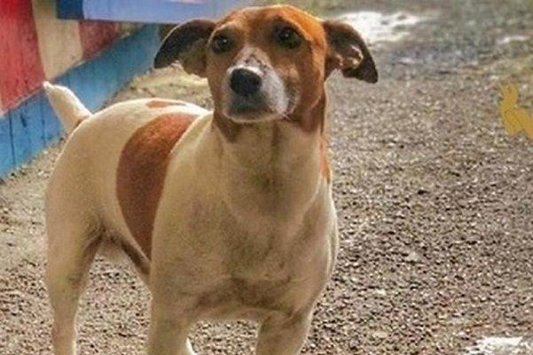 СМИ: итальянская мафия объявила полицейскому псу вендетту