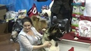 Шпицы и бест 5 группы, Выставка собак Северная осень Архангельск