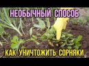 Как избавиться от сорняков БЕЗ ХИМИИ с помощью соли и уксуса Дачные советы