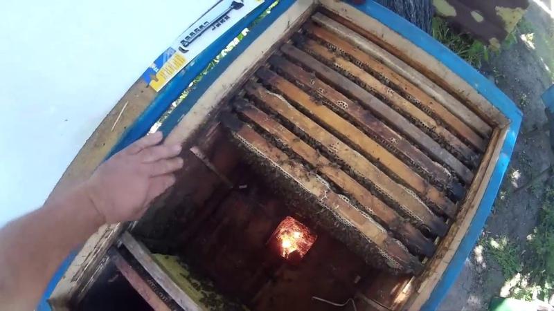 Как отводок сделать и мёду июньского взять. Делаем отводок ясли медовичек