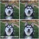 «я притворилась, что бросаю мяч, и подловила момент, когда мой пес понял, что я его предала»