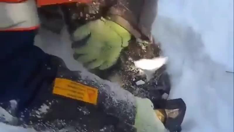 Мужчина спас щенка, который в мороз примерз к дороге vexbyf cgfc otyrf, rjnjhsq d vjhjp ghbvthp r ljhjut