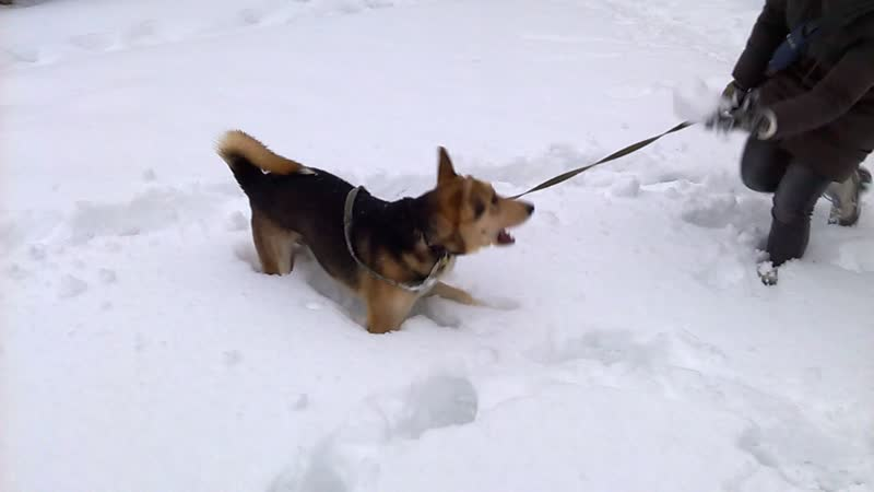 Марик на прогулке Играем в снежки