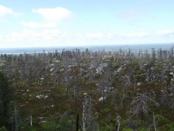 Восхождение на гору Воттоваару: «Здесь врут компасы и даже навигаторы путаются». Воттоваара. Самая высокая гора Западно-Карельской возвышенности. Самая странная гора, окутанная болотным туманом