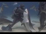 Акула чуть не откусила голову дайверу. Вот тебе и адреналин / Нападение акулы на человека