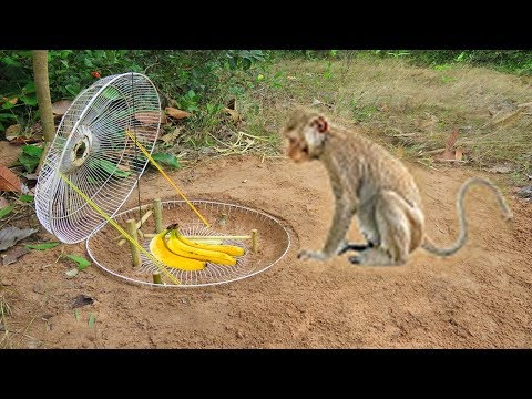 Amazing Quick Monkey Trap Using Electric Fan Cover Wood That Work 100% - How To Make Monkey Trap