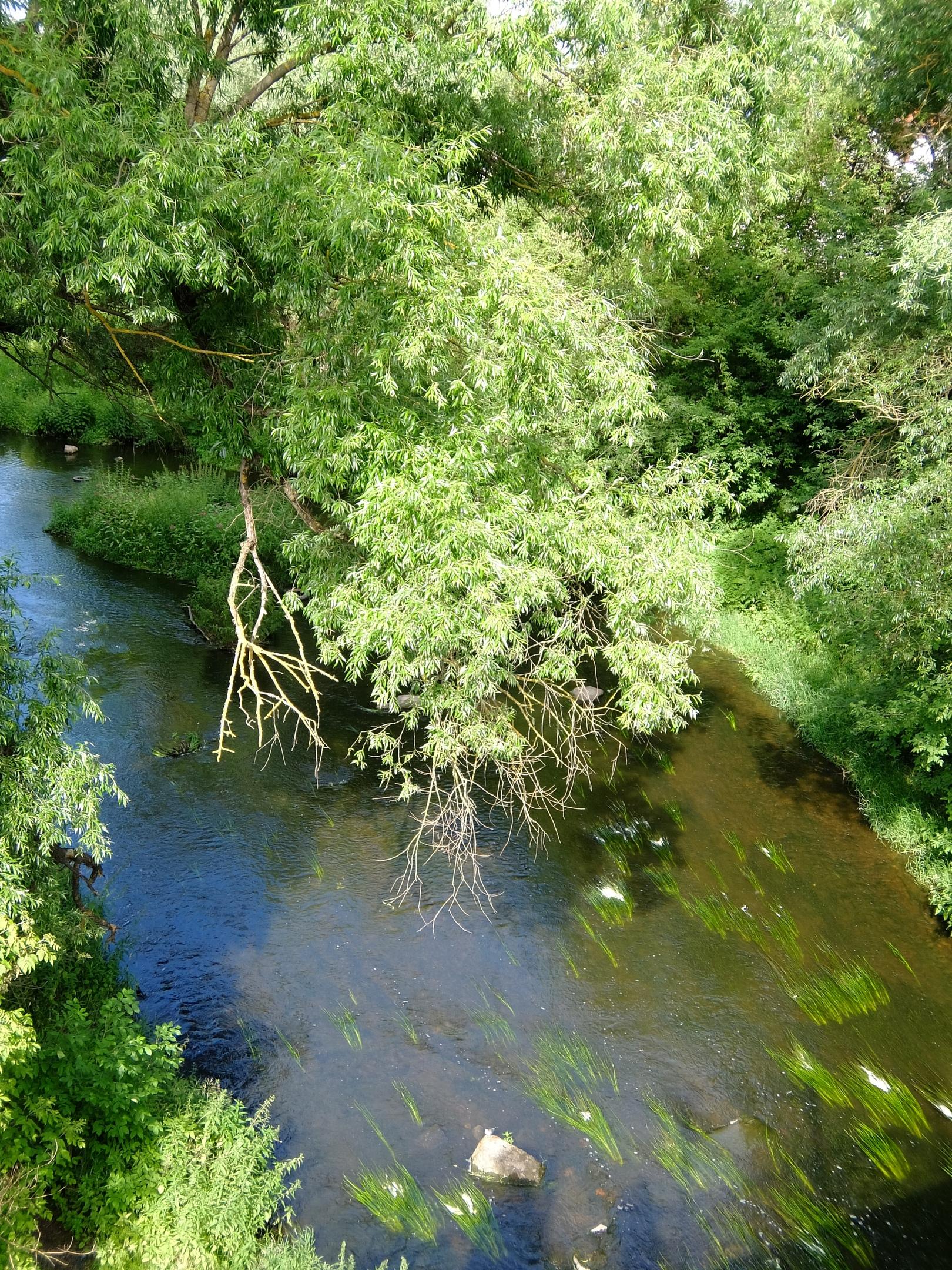 Река Сестра, вид с моста