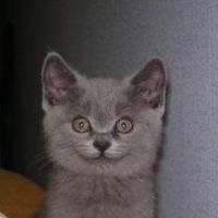 Кошечка Кошечкина, 29 января , Ровно, id216190670