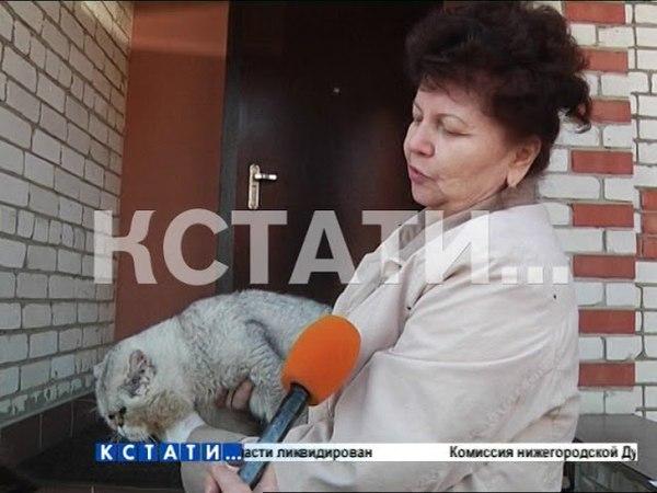 Успокоить Семеновский район сегодня попытались ветслужбы
