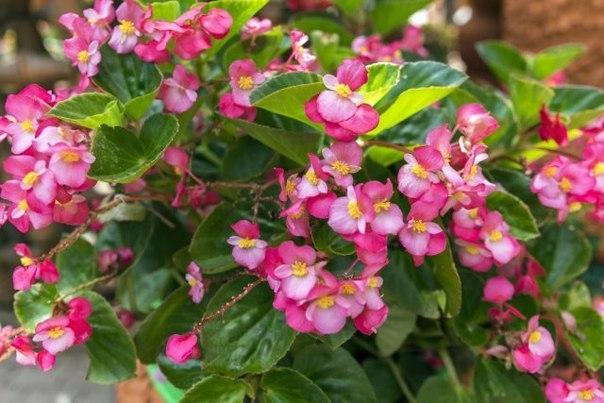 Какие цветы сажают на рассаду в феврале