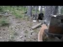 Медведь пришёл на территорию кота