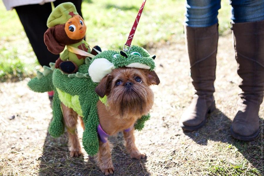 праздник собака улыбака