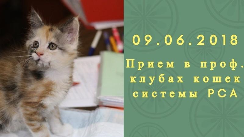 Прием в проф. клубах кошек PCA 09.06.2018г