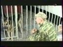 """Питомник """"Красная звезда"""" и кадры военной кинохроники о собаках войны. - клип"""