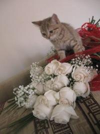 Елена Рублева, 12 августа 1985, Красноярск, id27151240