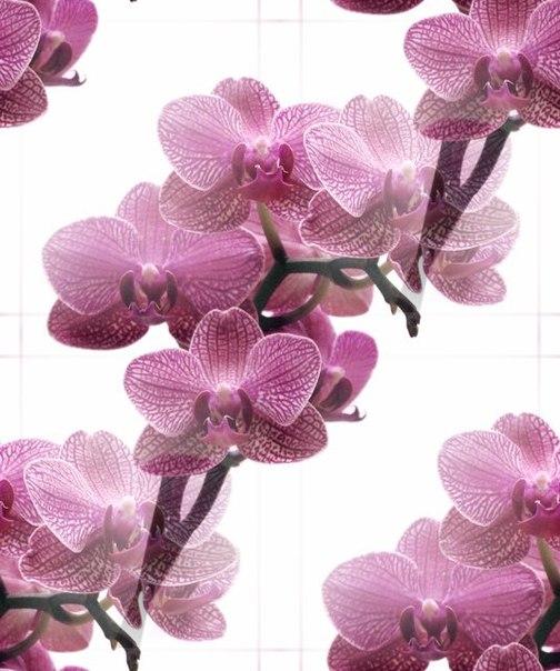Цветочные и растительные фоны - Страница 3 Sdf4zsbKBDo