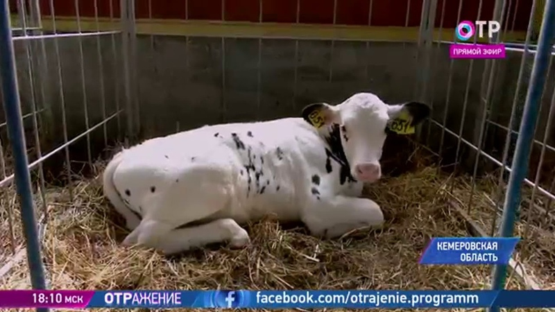 о проблемах животноводства