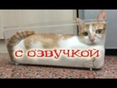 Приколы с котами –СМЕШНАЯ ОЗВУЧКА ЖИВОТНЫХ - ПОПРОБУЙ НЕ ЗАСМЕЯТЬСЯ от DOMI SHOW