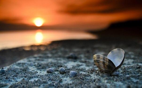 Если хочешь стать по настоящему живым – сначала просто расслабься... И найди внутри себя ощущение. Найди ощущение самого себя – живого, чувствующего и настоящего. Найди ту точку в себе, где нет страхов и беспокойств. Где есть только Тишина... Когда ты найдешь точку тишины, покоя и прозрачности – ты поймешь, что эта Тишина, что этот Покой и эта Прозрачность – и есть Ты. И тебе уже не захочется возвращаться к тому, что ты раньше считал собой – клубку переживаний, страхов и бесконечных желаний,…