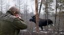 Охота на лося Moose hunting jjnf yf kjcz moose hunting