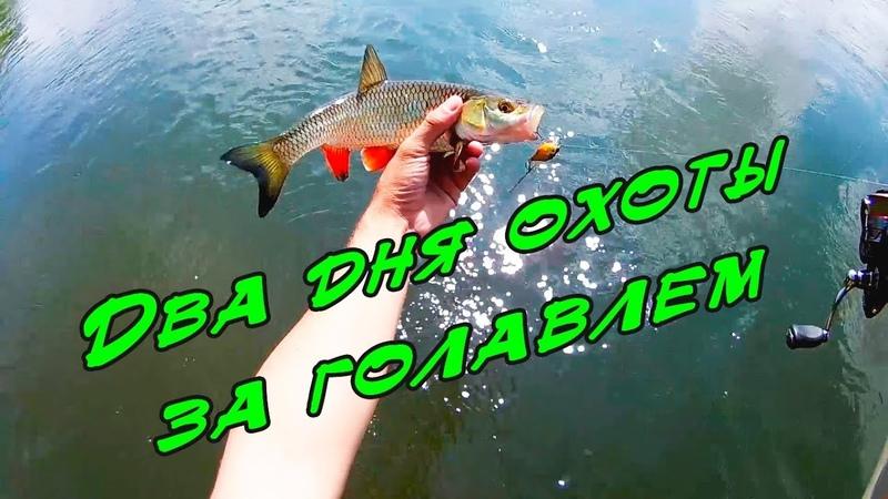Как поймать голавля на спиннинг|Дневник одного рыбака