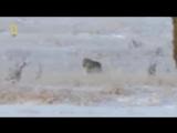 Блатной Удар - Одинокий Волк