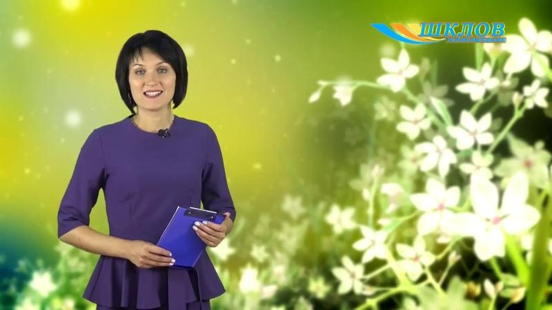Телекомпании Шклов 5 лет