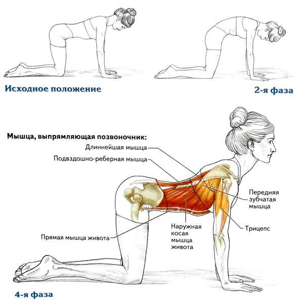Упражнения для мышц спины в домашних условиях для женщин фото