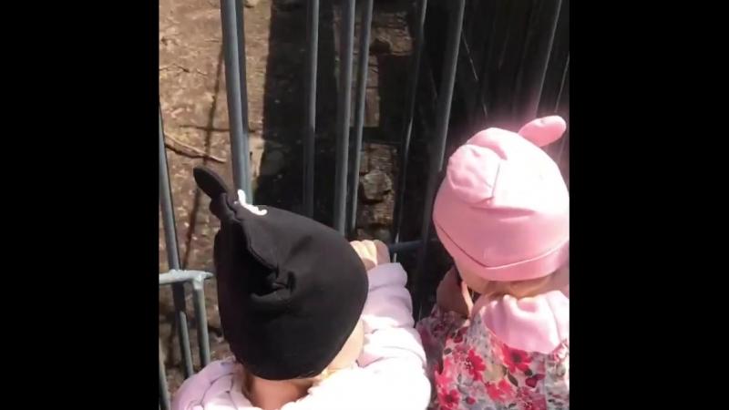 Забавные мишки. Видео lukashov.ka