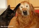 Доброта — это то, что может услышать глухой и увидеть слепой.(Марк Твен)