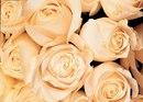 заказать кремовые розы срочная доставка саранск.