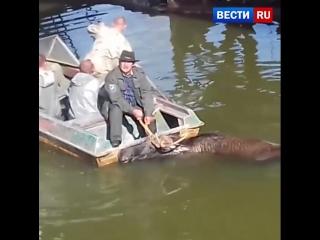 Спасение лося попало на видео