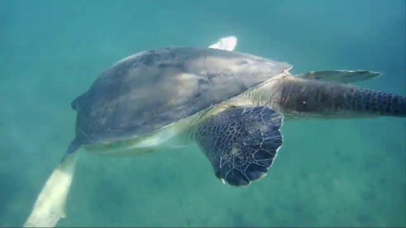 Подводный Мармарис 2018 - ныряние и плавание с черепахой под водой, косяки рыбы, подводные съемки