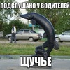 Подслушано у водителей Щучье.