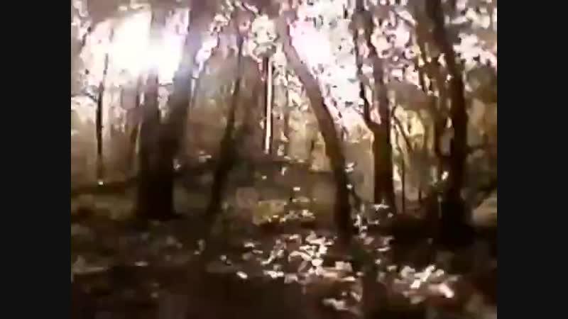 Ястреб демонстрирует чудеса маневренности среди деревьев в лесу