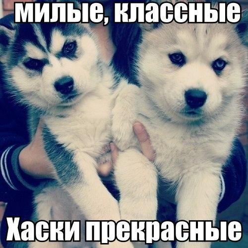 Фото №359754483 со страницы Максима Романова