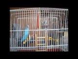 Видео про говорящего попугая Илюшку-болтушку
