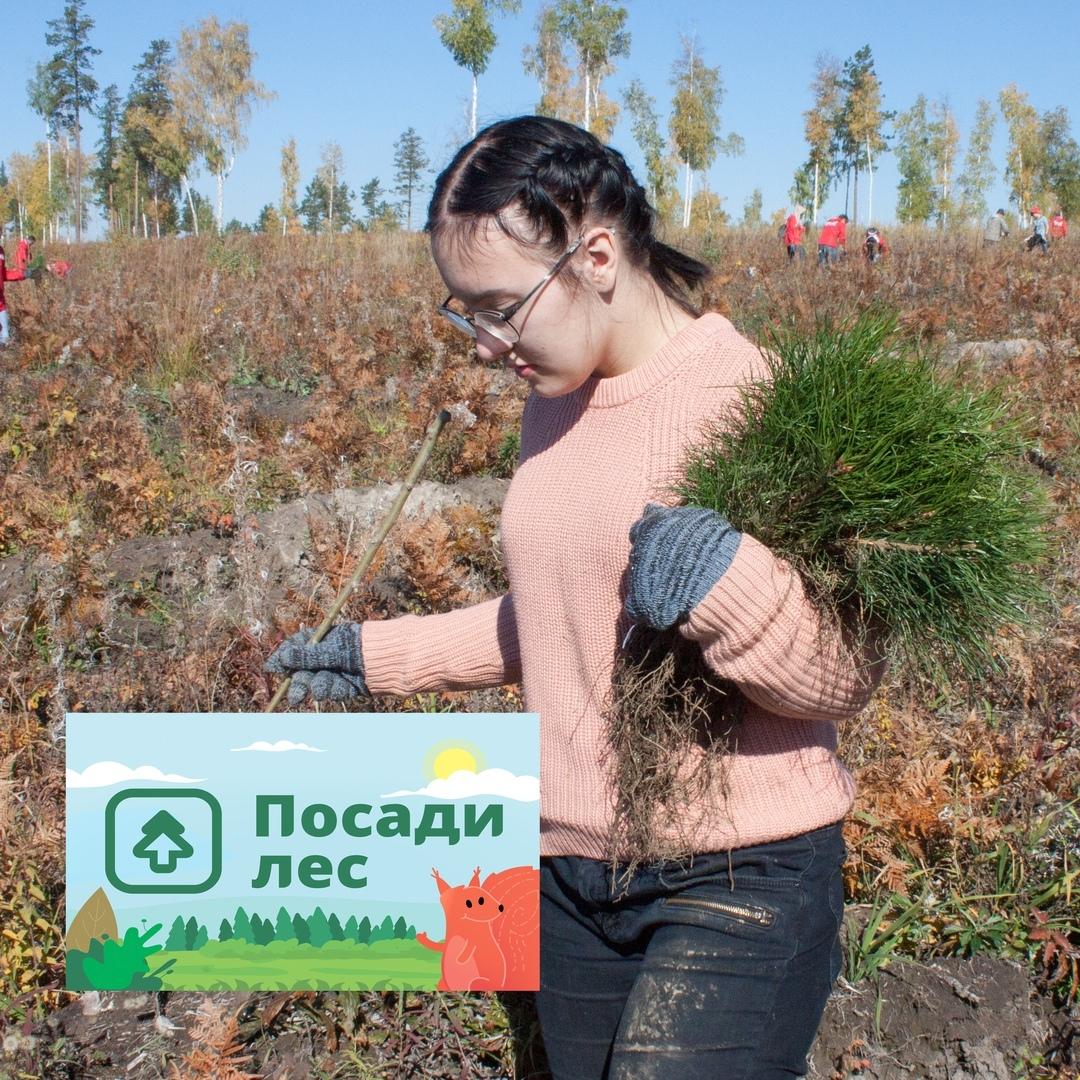 Афиша Иркутск Посадим лес в Иркутской области