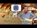 GnoKids Homework Videos - Learn English with Alex's Adventures!