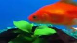Normal fish