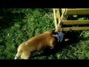 Wiktor Minaev Viktorovich Мартин на природе видео 100% собака друг человека самый верный друг помощь всего человечеству .